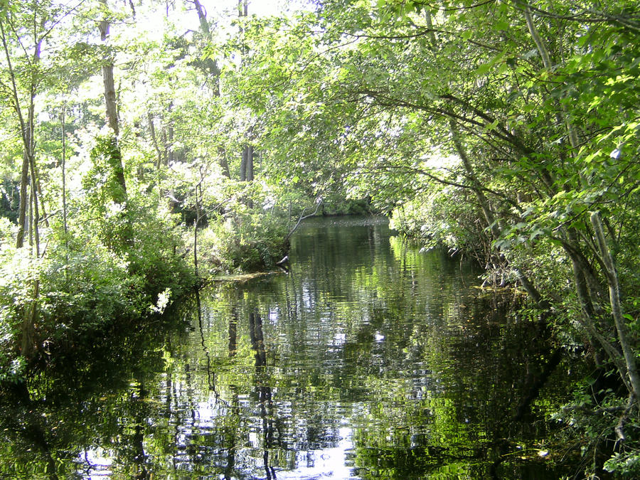 lake waccamaw chat sites The town of lake waccamaw is a small southern community located on the shores of the largest natural fresh water lake in north carolina.