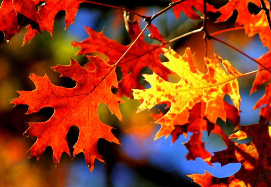 Color Cascade (Fallen Leaves) by bluemangoimages