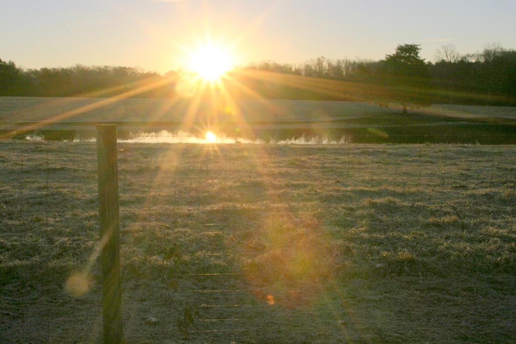 Good Morning Sunshine by bluemangoimages