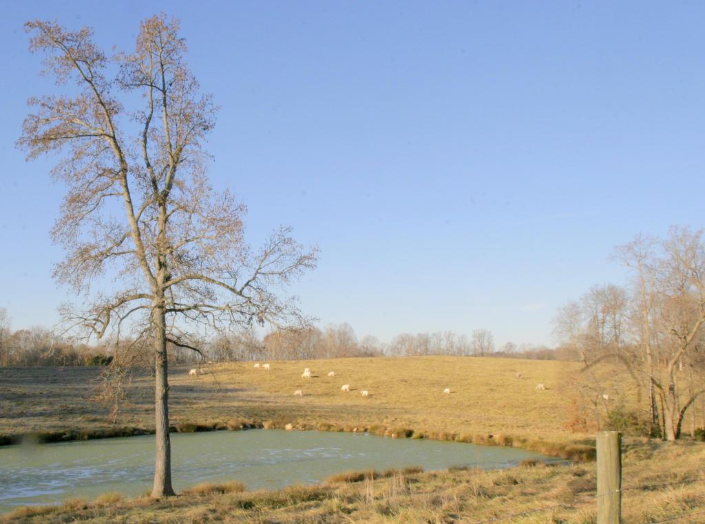 Peaceful Pasture by bluemangoimages