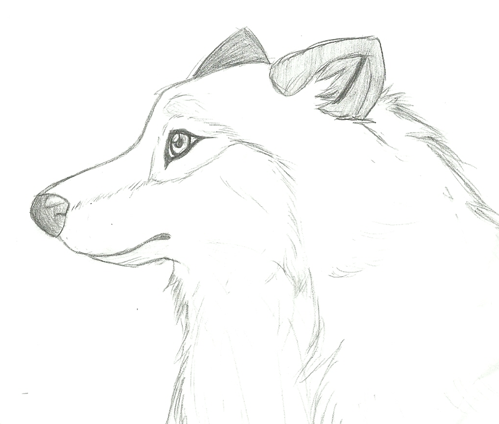 Wolf side view drawing - photo#2