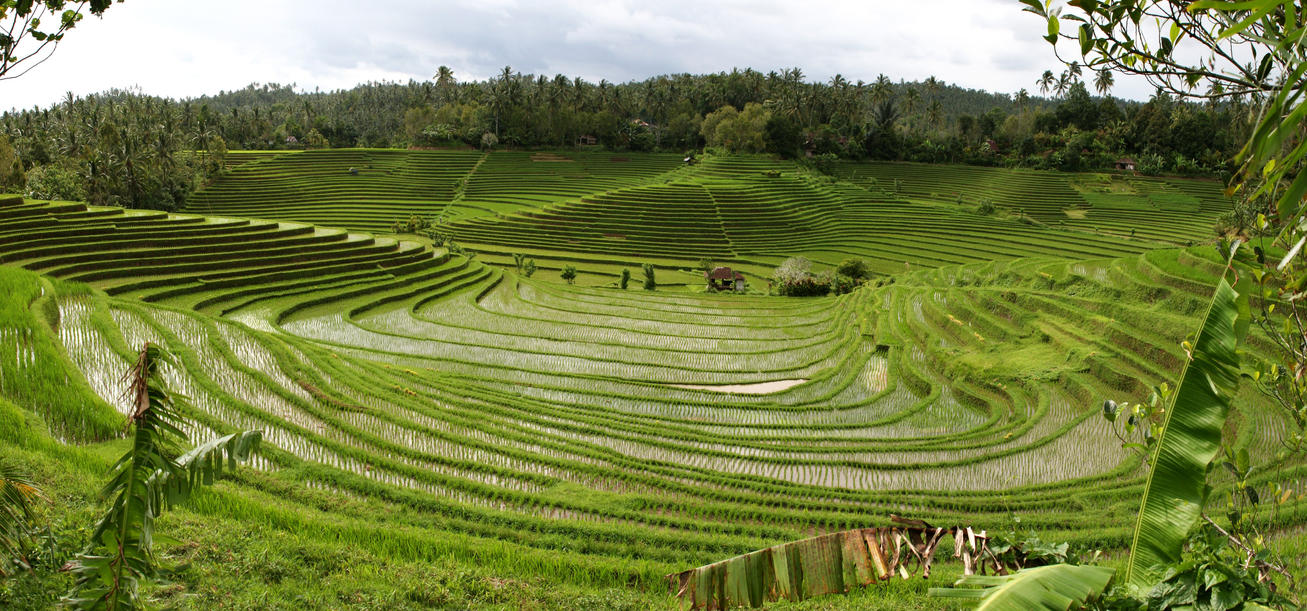 Panorama bali rice terraces 2 by melmarc on deviantart for The terraces 2