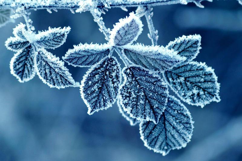 Frozen by SinaTyrell