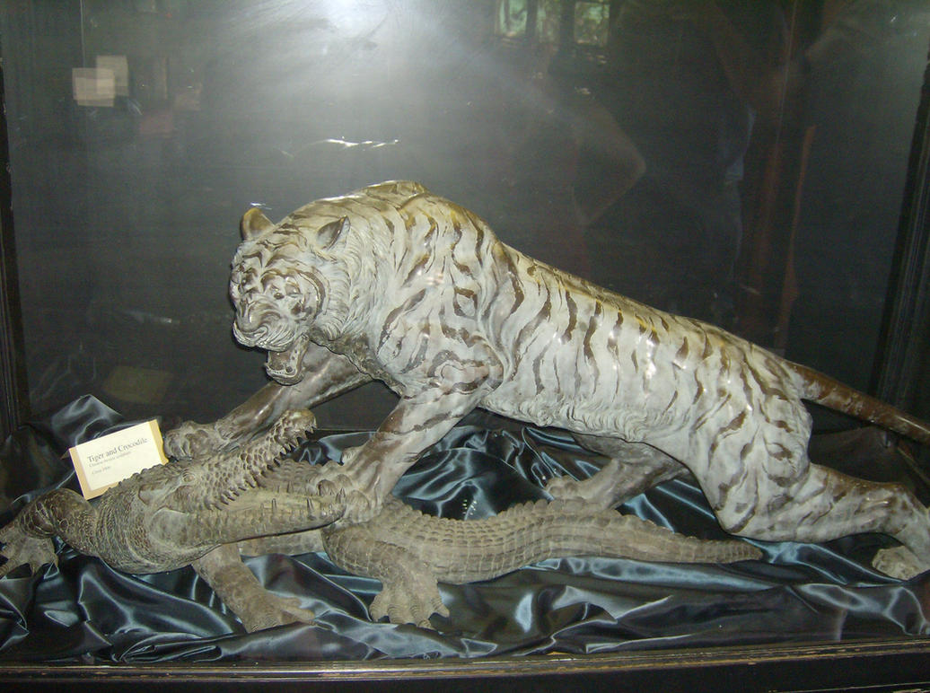 Saltwater crocodile vs tiger - photo#8