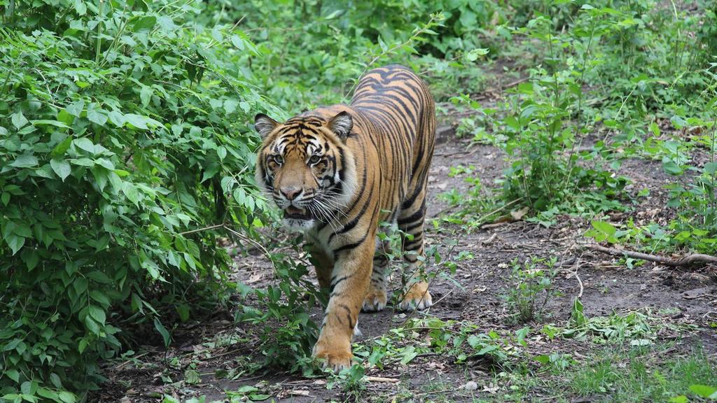 Bugara on the prowl