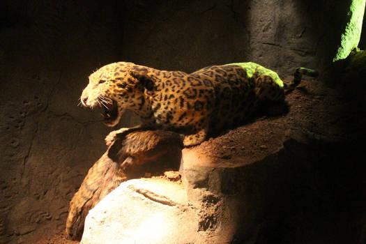 American Jaguar reconstruction