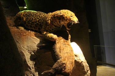 American Jaguar reconstruction 4