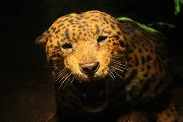 American Jaguar reconstruction 5