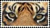 tiger eyes stamp by bulletblend