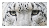 snow leopard eyes stamp by bulletblend