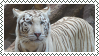 white tiger stamp by bulletblend