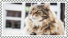 cat stamp 4 by bulletblend