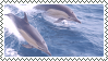 dolphin stamp 2 by bulletblend