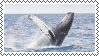 whale stamp by bulletblend