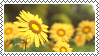 sunflower stamp by bulletblend
