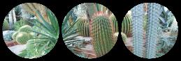 cacti divider by bulletblend