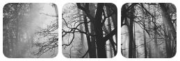 forest divider