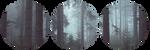 forest divider by bulletblend