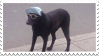 what a cool dog