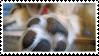 dog paw stamp