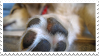 dog paw stamp by bulletblend