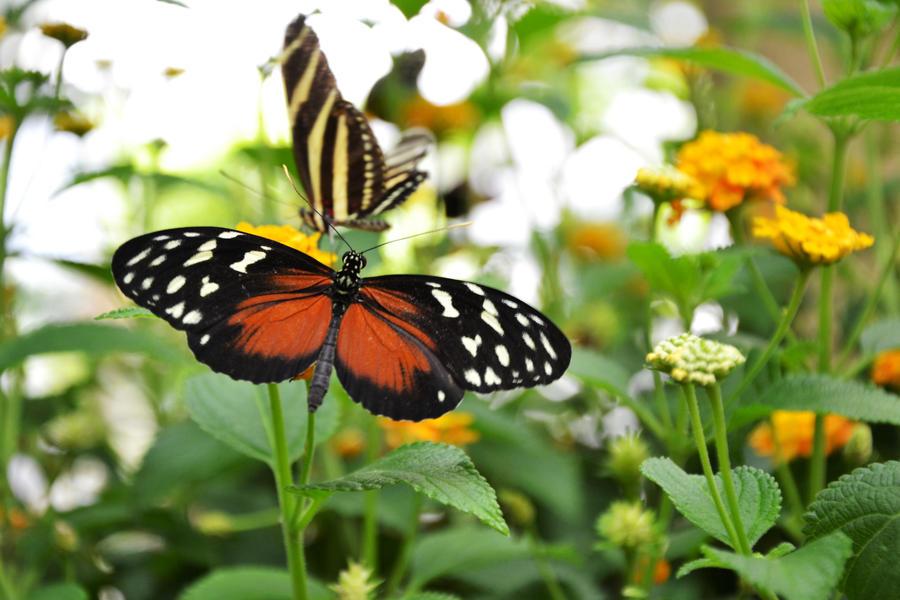 butterfly 6 by TatjanadaSilva