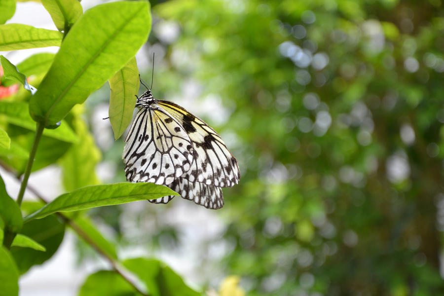 butterfly 7 by TatjanadaSilva