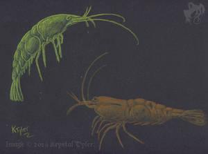Inktense Test - Shrimp
