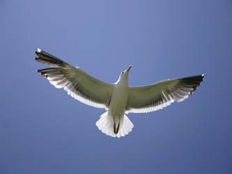a nice seagull,hard to believe by xXliveloveburndieXx