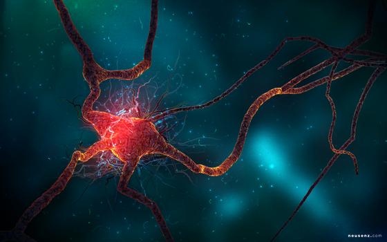 Neuron Spike Train