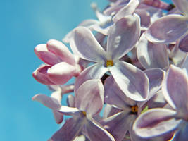 Lilac Pt.2