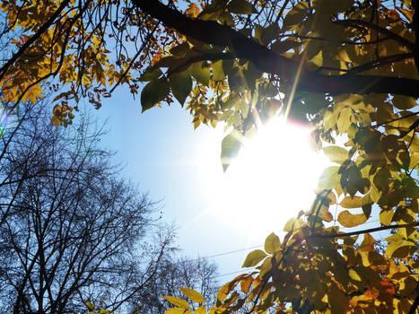 Sunshine Love Love
