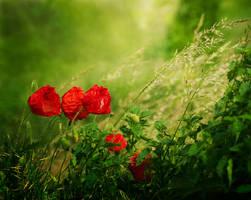 In the meadow... by Inspektor02