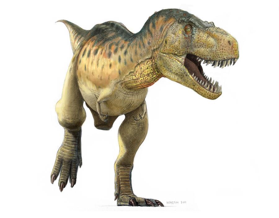 Tyrannosaurus by pheaston
