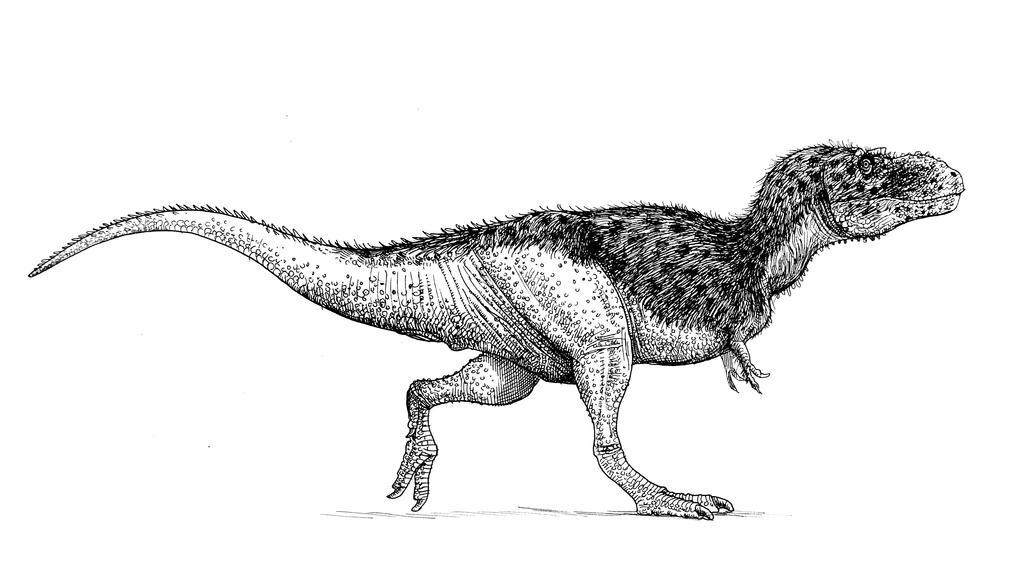 Albertosaurus by pheaston
