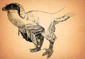 Fluffy Deinonychus by pheaston