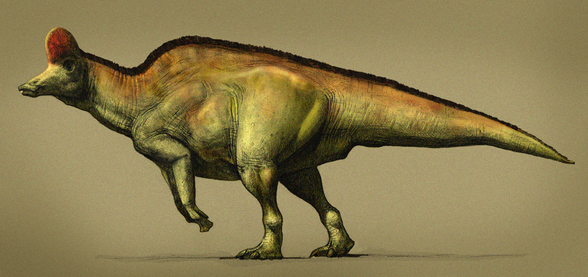 Corythosaurus by pheaston
