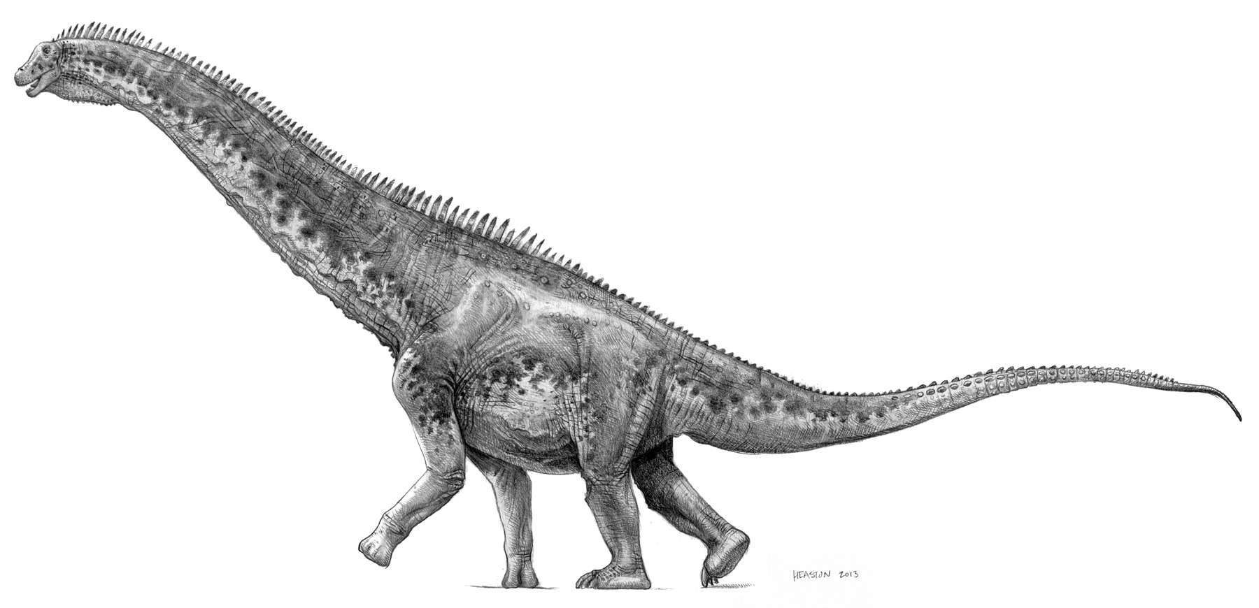 Cottonwood lizard (Alamosaurus) by pheaston