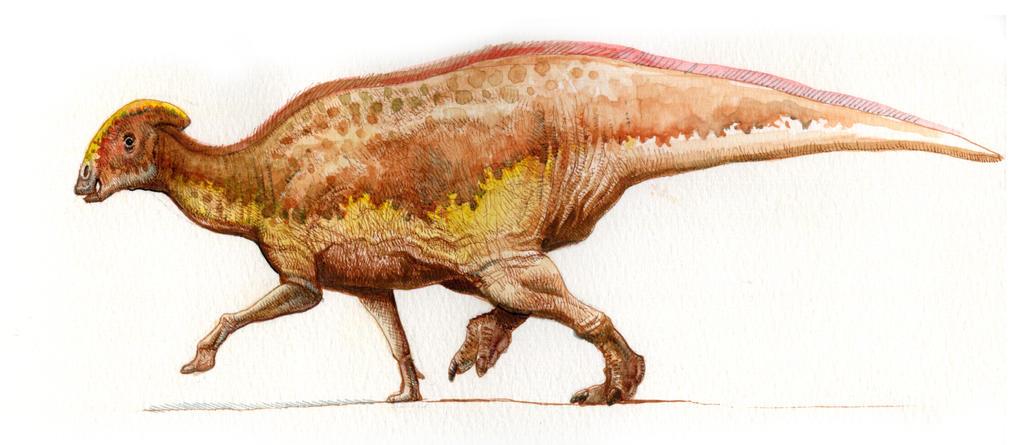 Parasaurolophus cyrtocristatus by pheaston