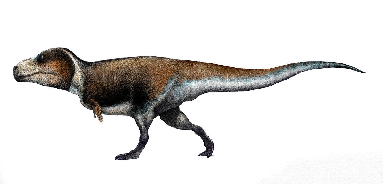 T. rex by pheaston
