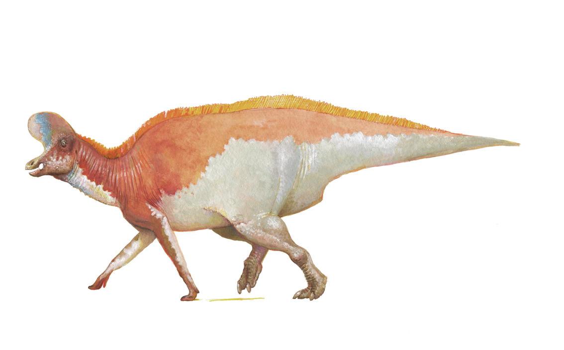 Lambeosaurus magnicristatus by pheaston