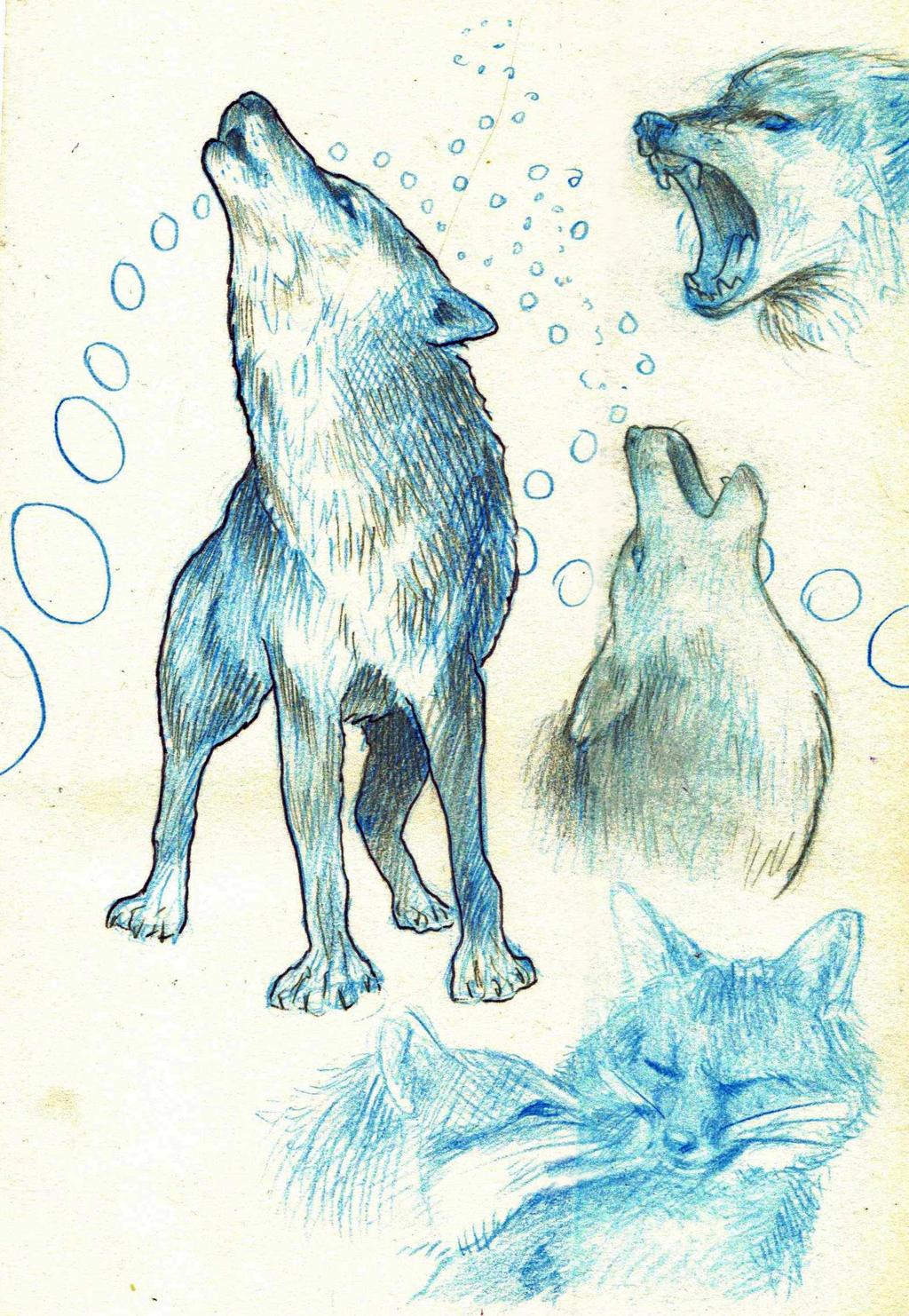 Wolf Study by AlexandriaMonik