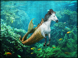 Hippocampus by Mikaboshi