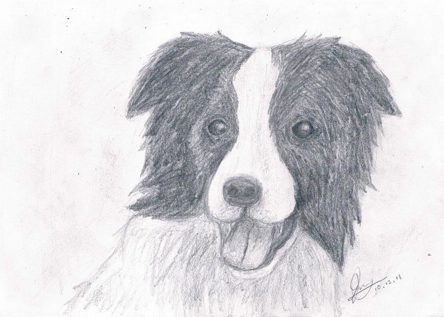 Border Collie Sketch By Jennyjzlei On DeviantArt