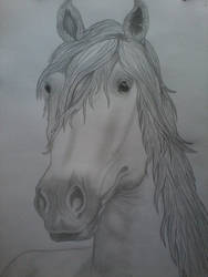 Horse of my Mother