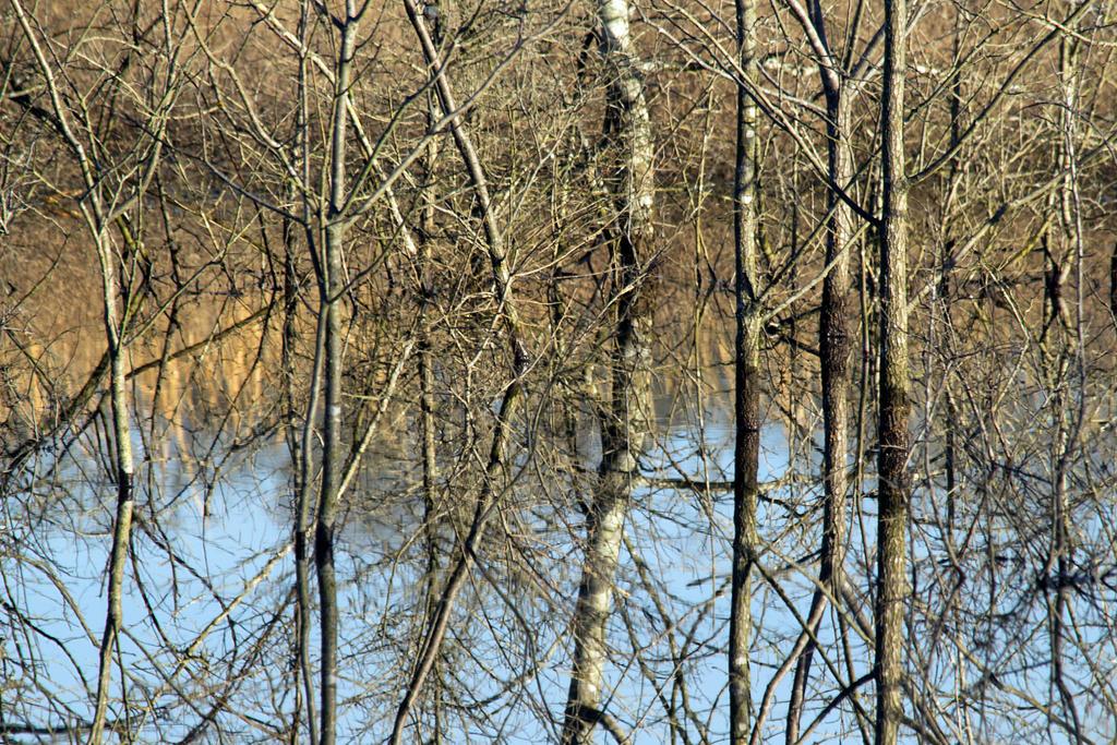 Winter Reflected by donnasueb