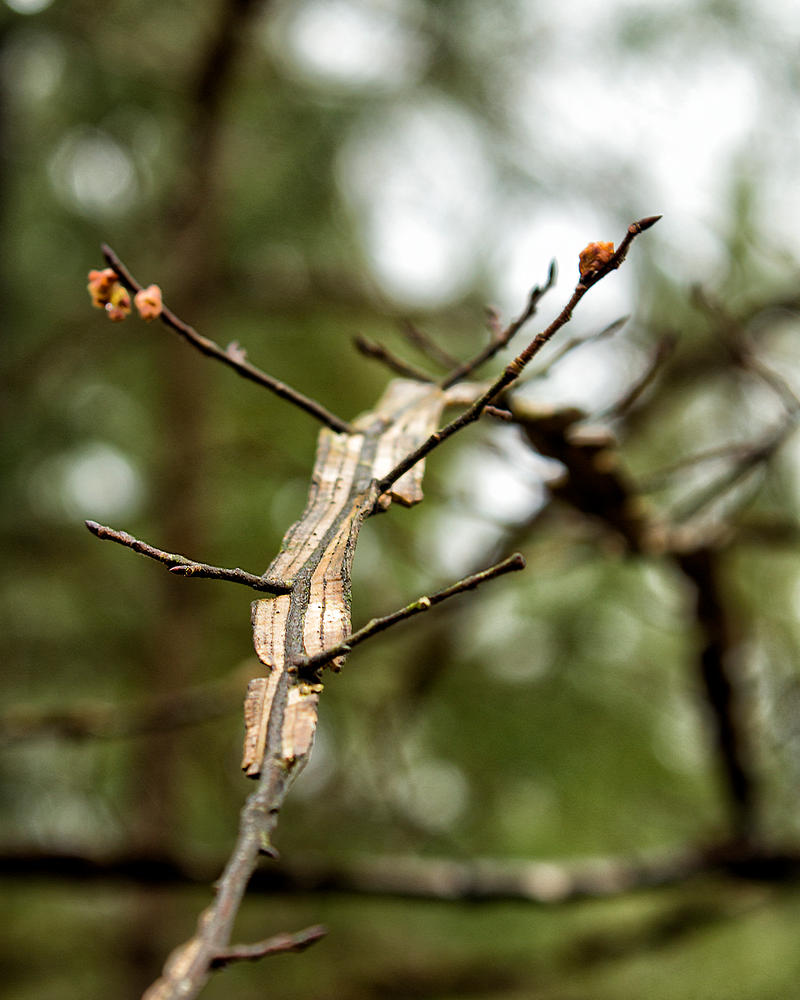 Clinging Elm 2 by donnasueb