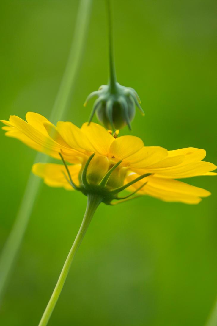 Late Bloomer by donnasueb