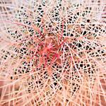spined design by donnasueb