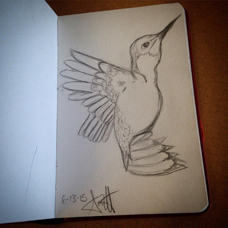 Humming Bird Sketch by AbbyCatWolff